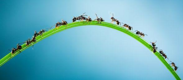 hormigas-y-el-cambio-climatico-588x257