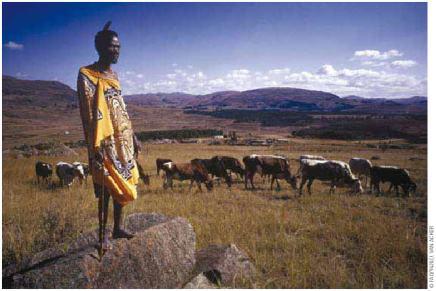 herdsman 1971