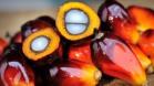 palm-oil-fruit